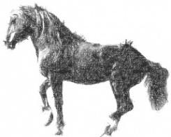 equilibre-sur-les-hanches-cheval-rassemble