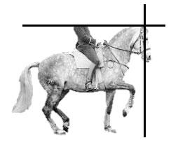 equilibre-sur-les-hanches-cheval-rassemble2