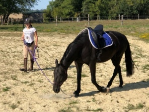 Mobilisation musculaire, développer les forces de son cheval
