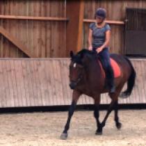 Le contact : le lien subtil entre la main du cavalier et la bouche du cheval