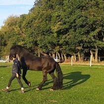 L'apprentissage chez le cheval, quelle méthode ?