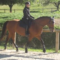 Comment placer son cheval – le mettre sur la main